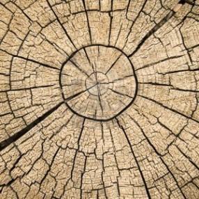 Bomenkap De Zijde